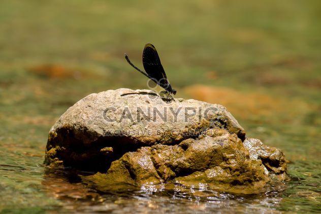 Libélula negra sobre la roca - image #327899 gratis