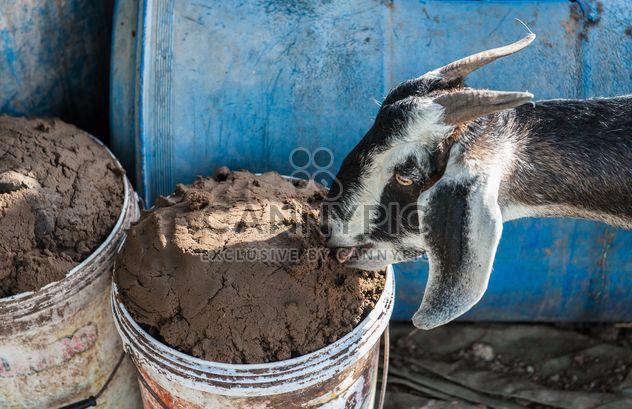 chèvres dans une exploitation agricole - Free image #328109