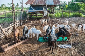 goats on a farm - image gratuit #328119