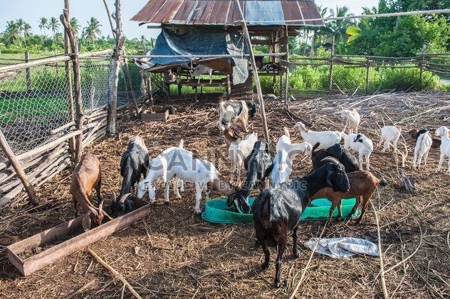 cabras en una granja - image #328119 gratis