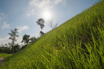 Green Slopes - image gratuit #328149