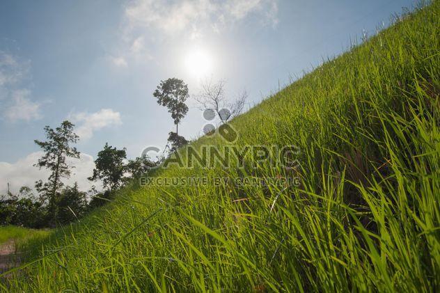 Зеленые склоны - бесплатный image #328149
