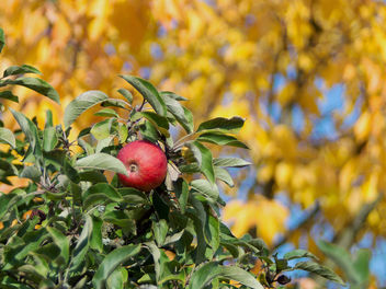 halb analoger Apfel - image #328399 gratis