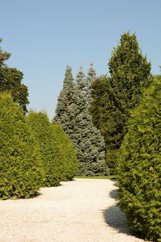 spruces in Park - image #328439 gratis