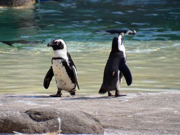 Group of penguins - image gratuit #328469