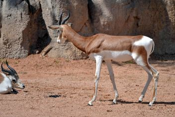Antelope kid - Free image #328649