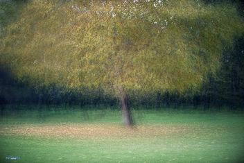 Autumn - Free image #329009