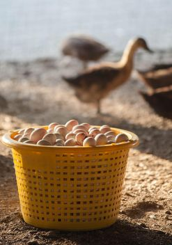 Duck eggs in yellow buckets - image #329669 gratis