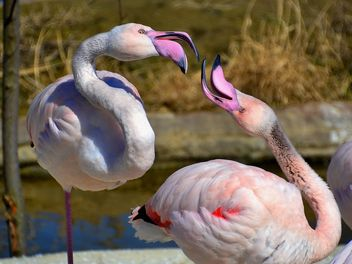 pink flamingos in park - Free image #329879
