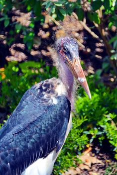 Marabu in park - image #329909 gratis
