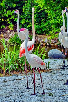 flamingos in park - image gratuit #329919