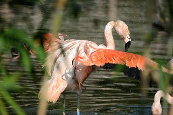 Flamingo in park - Free image #329929