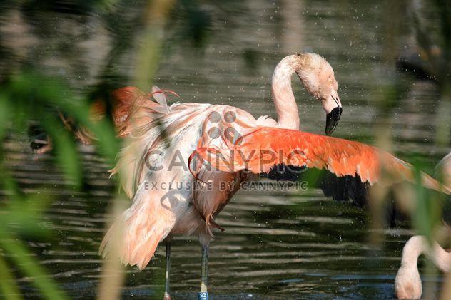 Flamant rose dans le parc - image gratuit #329929
