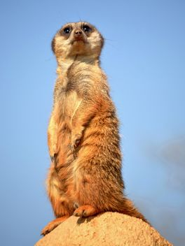 Meerkats in park - Free image #330239