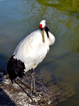 Crane in pond in a park - image gratuit #330299