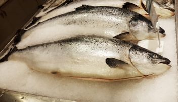 Fish food salmon raw - image #330729 gratis