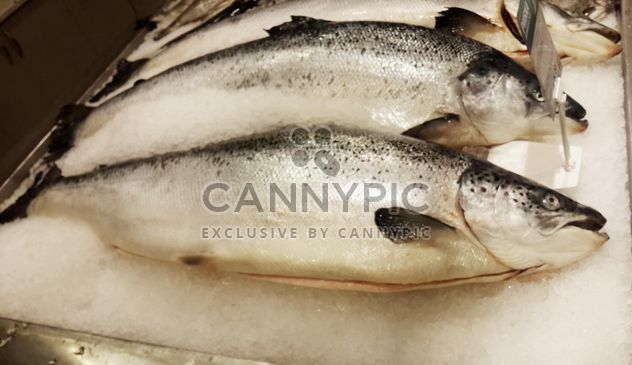 Fish food salmon raw - Free image #330729