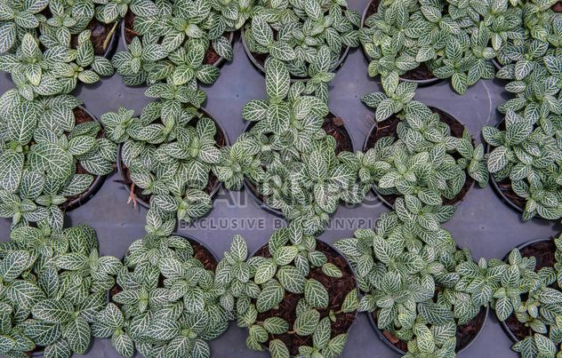 Foliage of plants in pots - Free image #330969