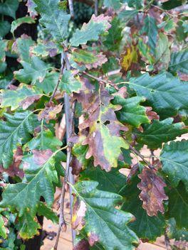 Autumn foliage - Kostenloses image #330979