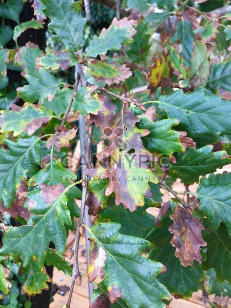 Осенняя листва - бесплатный image #330979