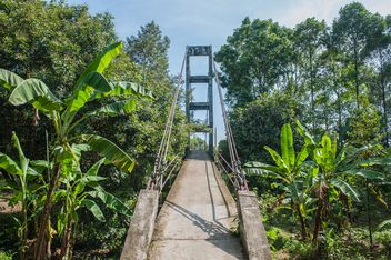 pedestrian bridge in forest - Free image #330999