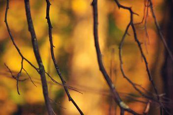 Autumn foliage - image gratuit #331009