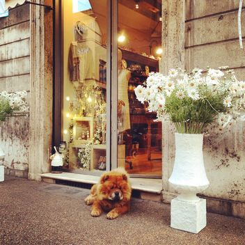 Chow Chow dog at the entrance to the store - бесплатный image #331599