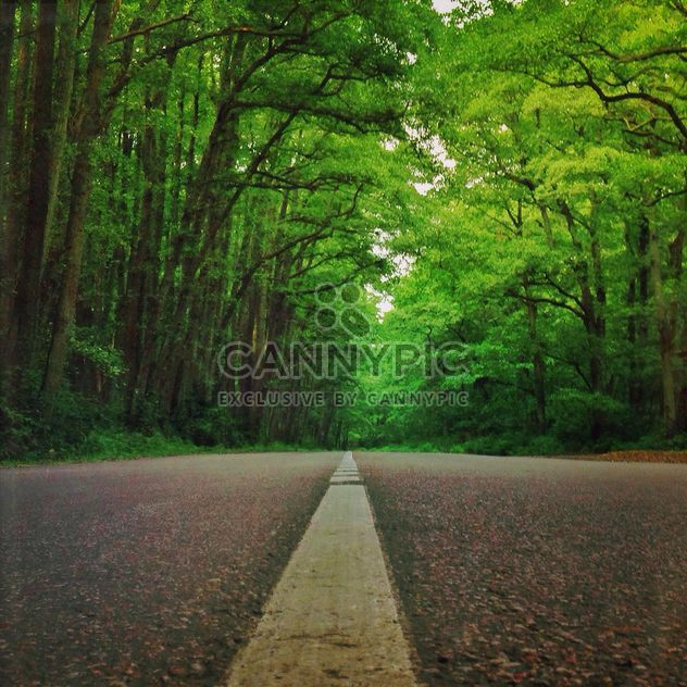 The road in the national park Curonian Spit,Russia - Free image #332839
