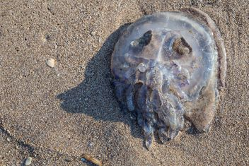 jellyfish on sand - image gratuit #332859