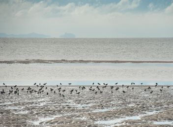 Birds on sea beach - Free image #332909