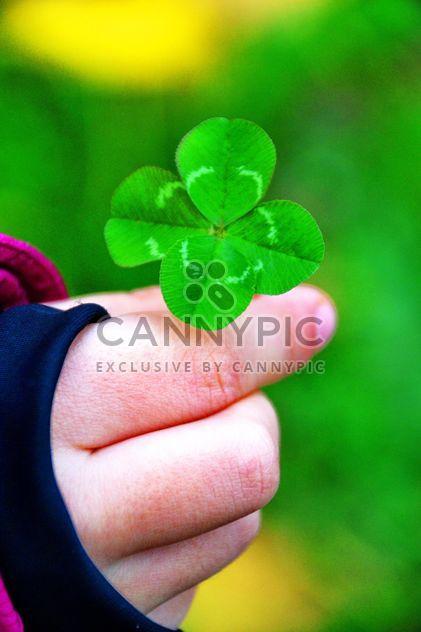 four-leaf clover - Free image #333759