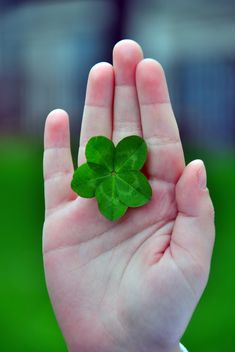 five-leaf clover - image #333779 gratis