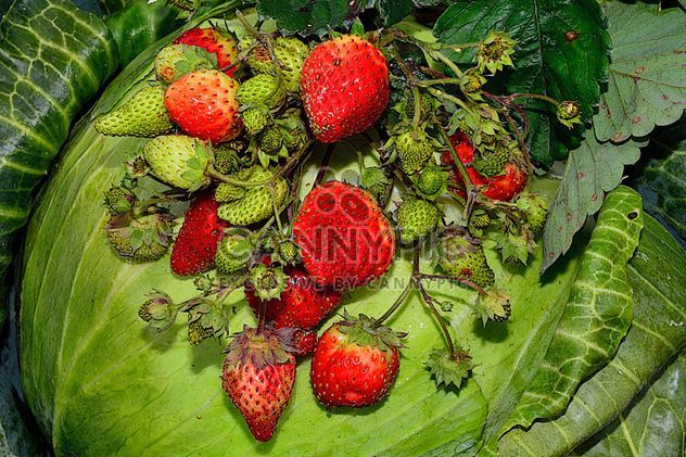 Herbst am Gabbige Erdbeere - Kostenloses image #334269