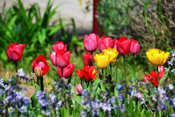 lawn with tulips - image #334699 gratis