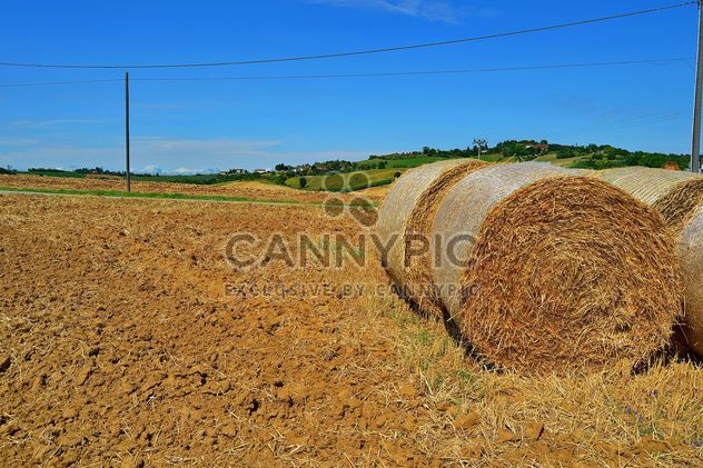 Haystacks, rolled into a cylinders - Free image #334739