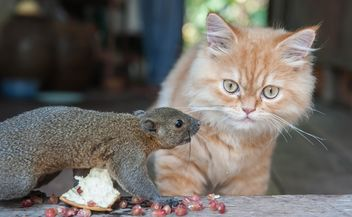 Cat and squirrel comunicating - image #335029 gratis