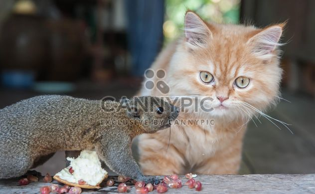 Cat and squirrel comunicating - Free image #335029