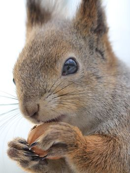 Squirrel eating nut - image #335039 gratis