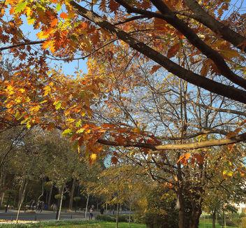 Turkey (Istanbul) Autumn foliage - Free image #335169
