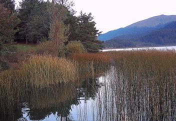 Turkey (Bolu-Abant Lake) Reeds - Free image #335849