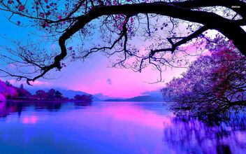 Purple Sunset - image gratuit #336889
