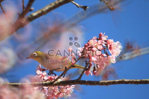 Aves en árbol floreciente - image #337439 gratis