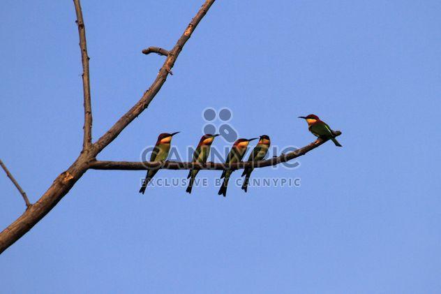 Kingfisher birds on tree branch - Free image #337469