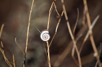 Snail on dry herb - image #338319 gratis