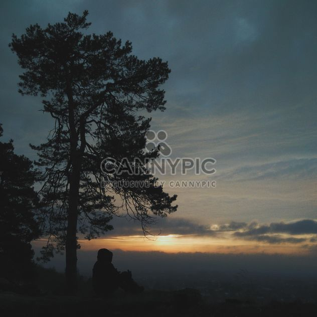 Man under tree at sunset - Free image #338539