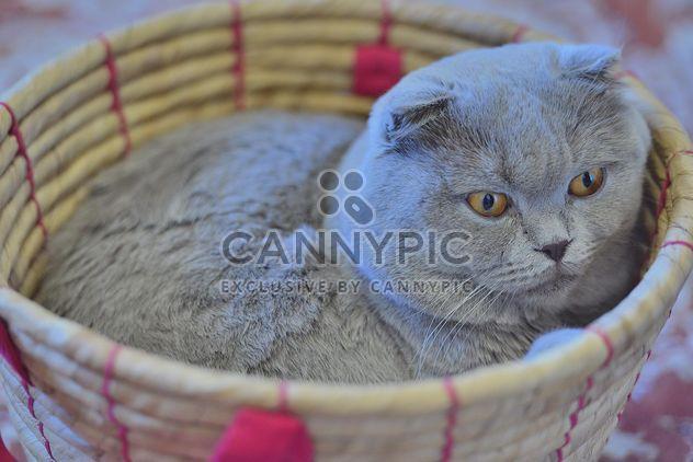 Grey cat in basket - Free image #339199
