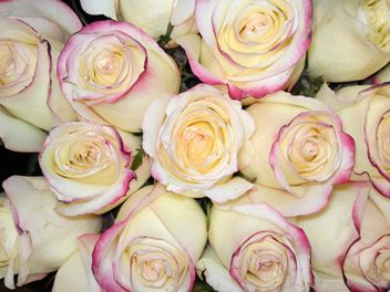 Bouquet of white roses - Free image #339239
