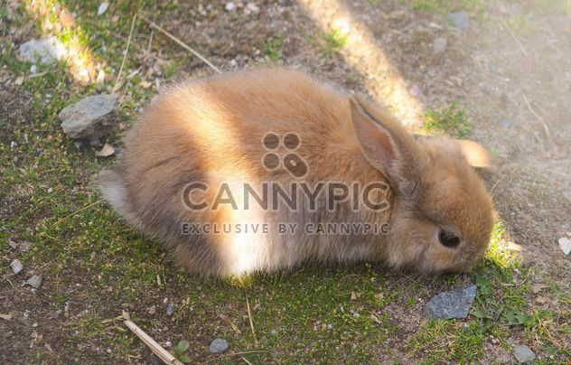 Cute bunny on ground - Free image #341289
