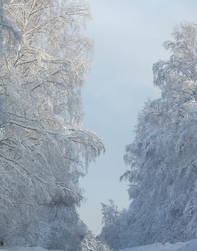 Winter landscape, Priozersk district, Russia - Kostenloses image #343629
