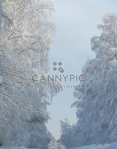 Winter landscape, Priozersk district, Russia - Free image #343629